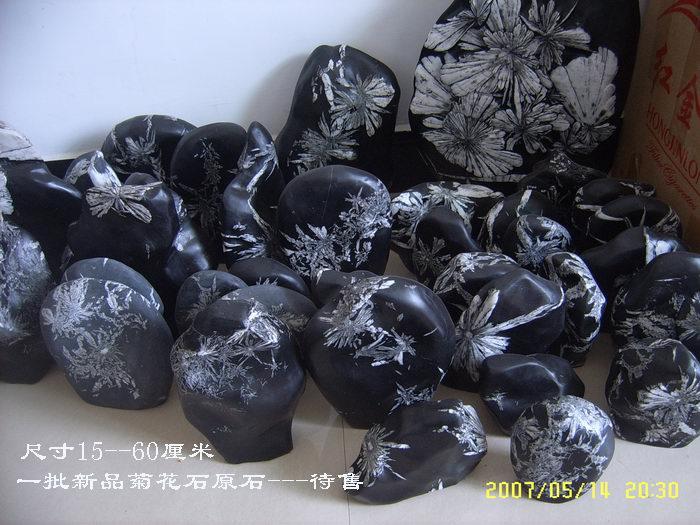 菊花石原石----